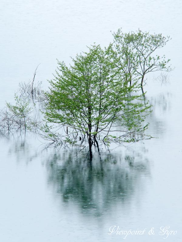 小雨の奥四万湖