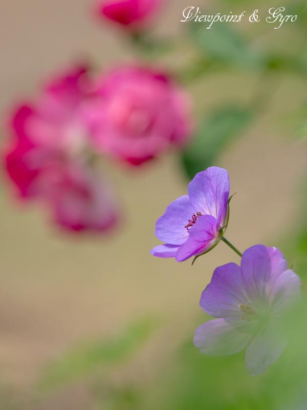 花菜ガーデン J