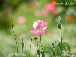花菜ガーデン L