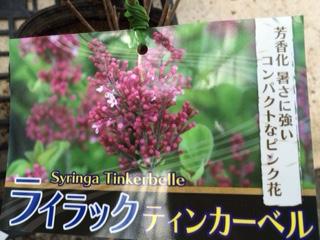 春のおすすめ-2