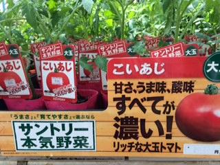 野菜入荷-1