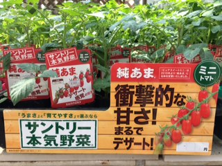 野菜入荷-2