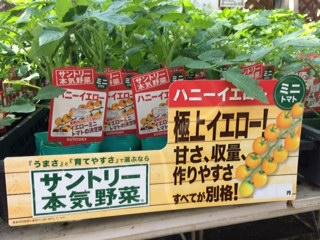 野菜入荷-3