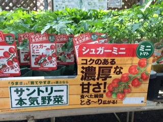 野菜入荷-4