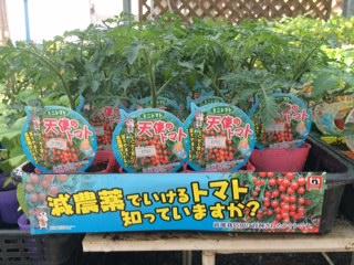 野菜入荷-5