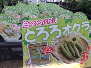野菜入荷-7