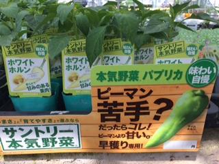 野菜入荷-8