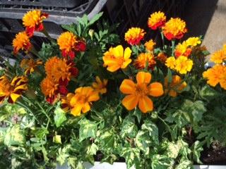 夏の花-6