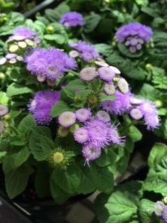 夏の花-7