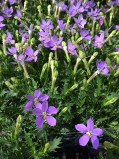 夏の花-9