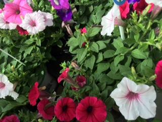 夏の花-11