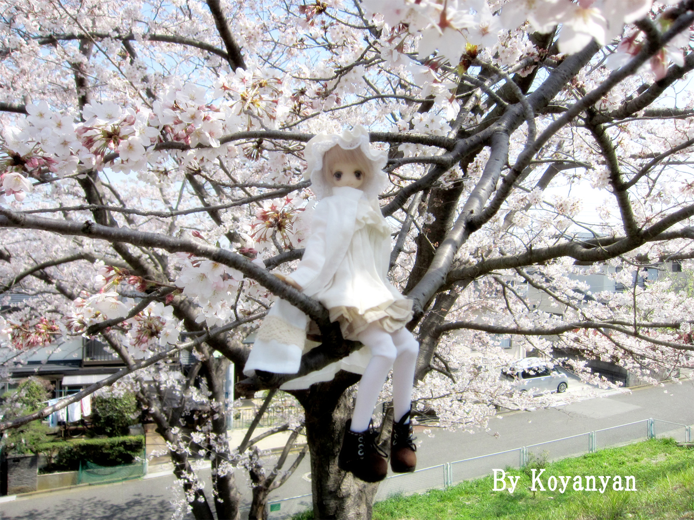 sakuraのコピー