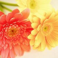 ★200オレンジの花