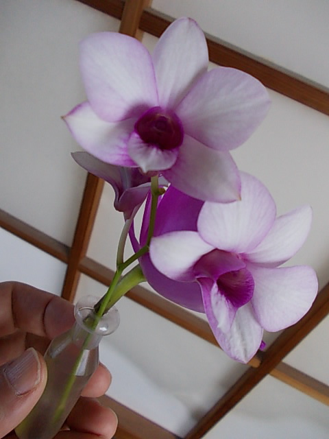 Orchid 20150107-2
