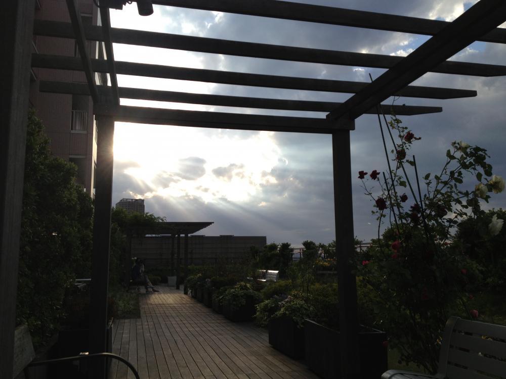 屋上庭園の斜光