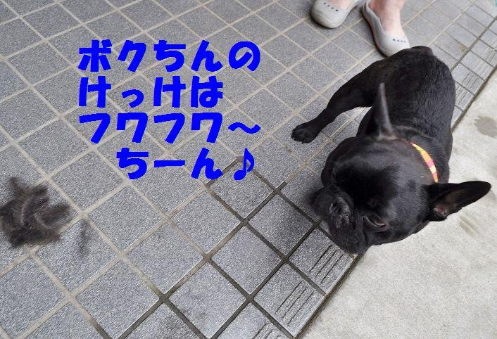 DSC_0013_20150628103529d30.jpg