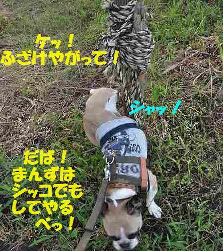 DSC_0027_20150721152920469.jpg