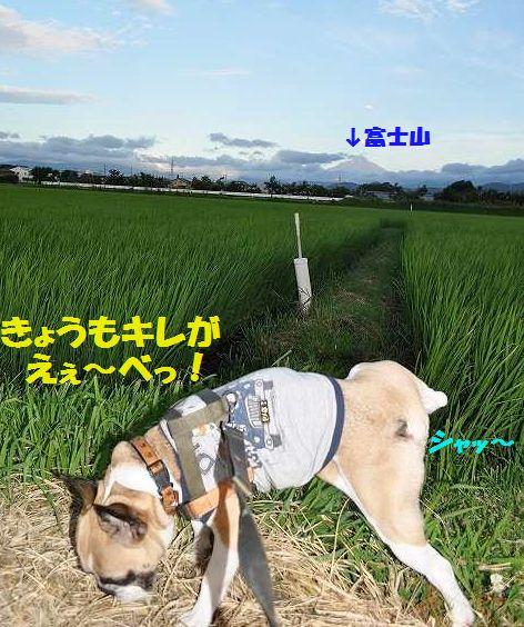 DSC_0035_201507211529249d1.jpg