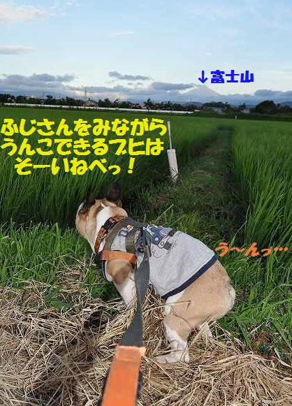 DSC_0036_20150721152944875.jpg