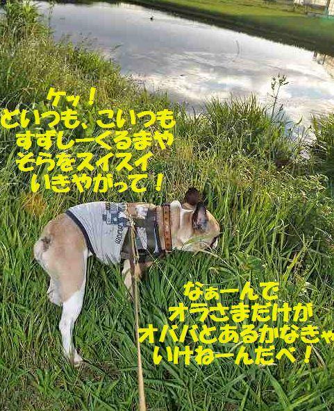 DSC_0039_201507211529460bb.jpg