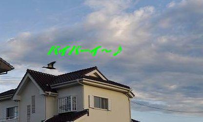 DSC_0043_2015072115294973e.jpg