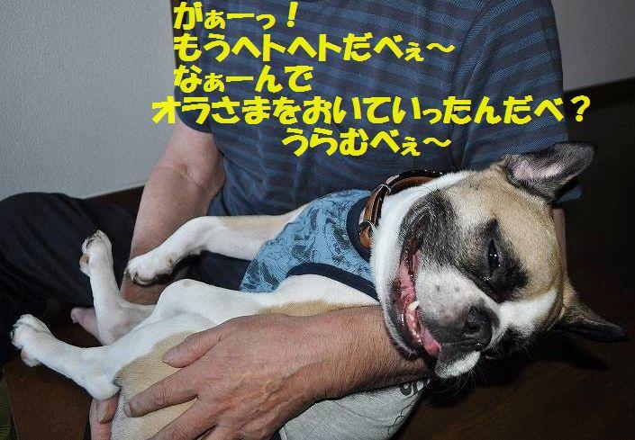DSC_0046_20150721152950dfa.jpg