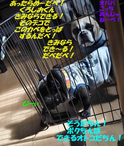 DSC_0061_201507231330258c6.jpg