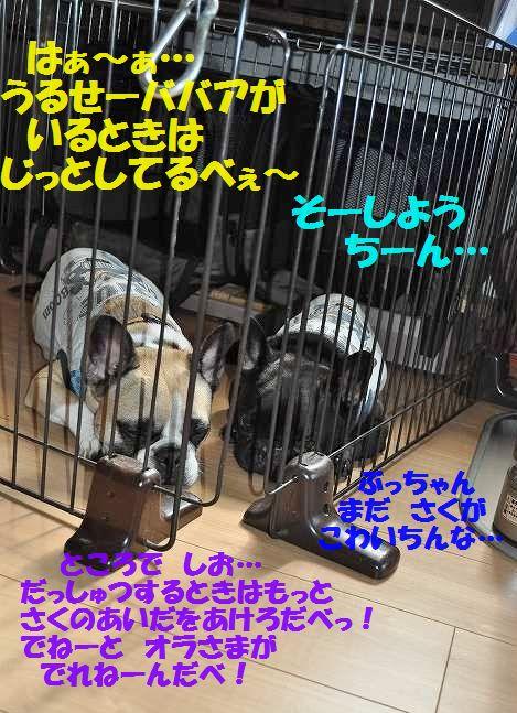 DSC_0067_201507231548020f3.jpg