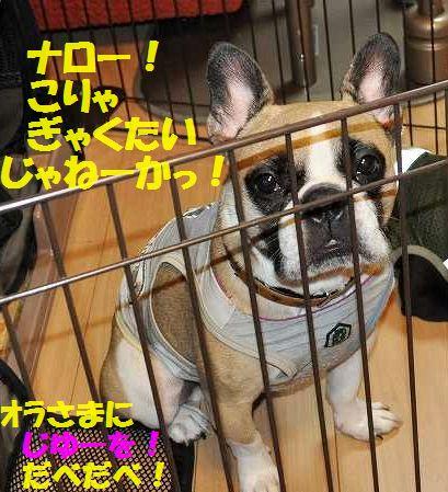 DSC_0067_20150724104027ab2.jpg