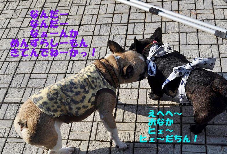 DSC_0102_201507270911139e0.jpg