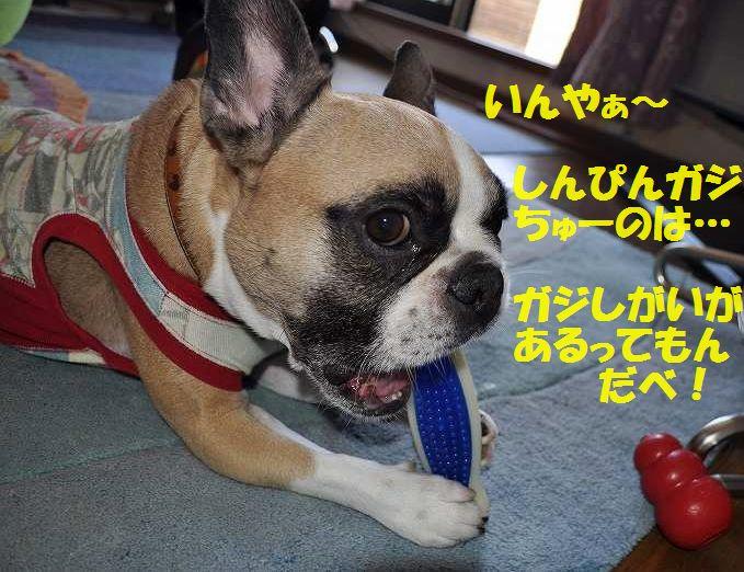 DSC_0112_20150701163329163.jpg
