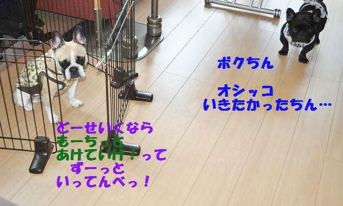 DSC_0136.jpg