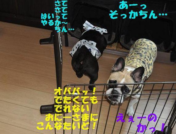 DSC_0140_2015072714495536b.jpg