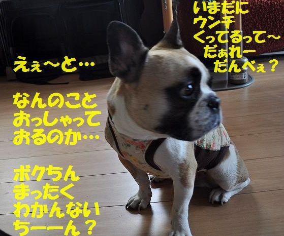 DSC_0169_201506261624431de.jpg