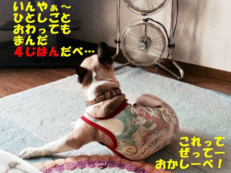 IMG_3531_201506281347517fc.jpg