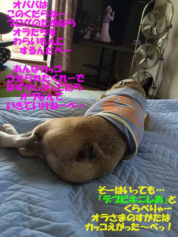 IMG_8170_20150713141912653.jpg