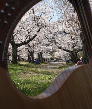 桜ライアー