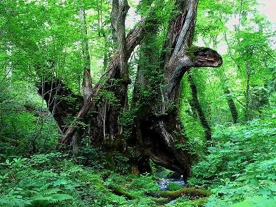 s-tree 1