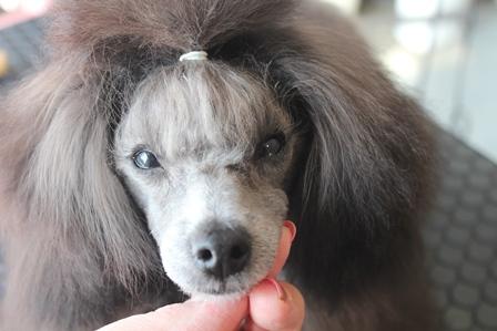 美犬0211