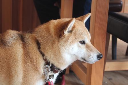 0228美犬