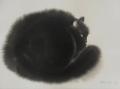 bcats2.jpg