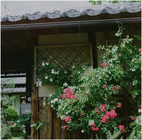 4-cf80-hassel-2015-5-17-花-portra400-75929-n-0-z-006_R