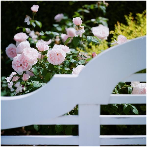 ローライ-2015-5-24-花フェスタ-portra160-10-623-n-50010_R