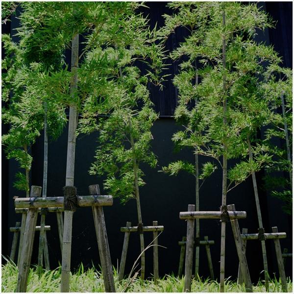 ローライ-2015-5-24-花フェスタ-フジ160-23-650-n-10023_R