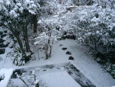 2階から庭。 #雪 #odawara