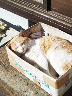 2:1猫2