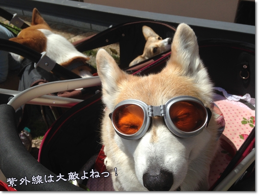 IMG_8700-1.jpg