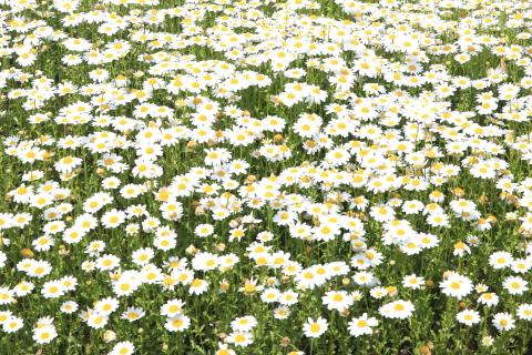 20150417flower3.jpg