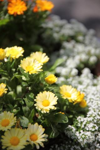 20150513flower0510_2.jpg