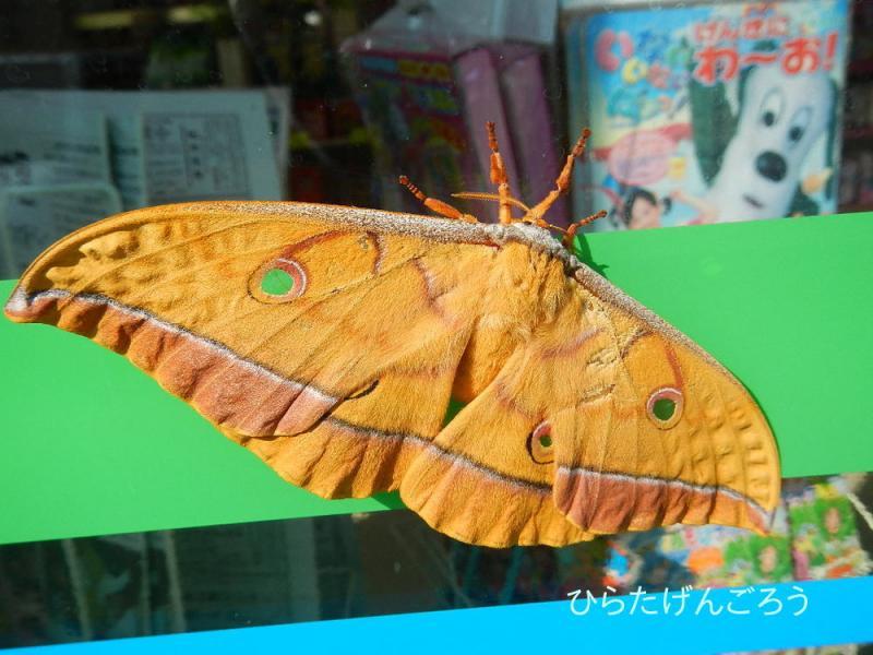 yamamai1.jpg